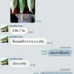 รีวิวจากทางบ้าน ข้าวโพดอินทรีย์ คุณสมชาย จ.นครราชสีมา