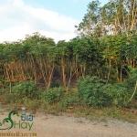 เทคนิคการพลิกฟื้นผืนดินด้วยเกษตรอินทรีย์(2)