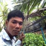 พริกไทยฝักยาวใบเขียวเข้มดกเต็มต้น จากประเทศกัมพูชา