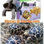 อาหารเต่าบก มาซูริ (Mazuti tortoise Food)