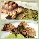 อาหารเต่าบก อาหารเต่า ที่ควรให้เต่าบกได้กินอย่างถูกต้อง