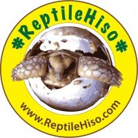 ร้านReptileHiso : ขายเต่าซูคาต้า ขายเต่าบก ฟาร์มเต่ายักษ์ และ สัตว์เลื้อยคลาน