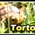 เต่าบก (Tortoise)