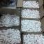 หัวเชื้อ Bhaesaj 50 ml. หัวเชื้อเภสัช เข้มข้นมาก ผิวขาวใส มีออร่า thumbnail 5