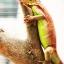 Red Iguana (อีกัวน่าแดง) thumbnail 1
