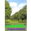 หนังสือ เกษตรอินทรีย์ฟิวชั่น สร้างธุรกิจเกษตรให้สำเร็จทันใจ thumbnail 1
