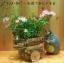 กระถางดอกไม้ My Neighbor Totoro (รถเข็น) thumbnail 2