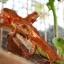 Red Iguana (อีกัวน่าแดง) thumbnail 6