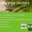Super Mix Moringa Oleifera Blend by Zija ซีจา ซุปเปอร์มิกซ์ ผลิตภัณฑ์เสริมอาหารมะรุมสกัด thumbnail 10