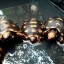 เต่า Cherry Head Redfoot Tortoise เต่าหนูน้อยหมวกแดง แห่งAmazon thumbnail 1