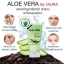 Aloe Vera 99% by I'Aura 40 g. เจลว่านหางจระเข้ thumbnail 9