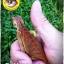 Red Iguana (อีกัวน่าแดง) thumbnail 4